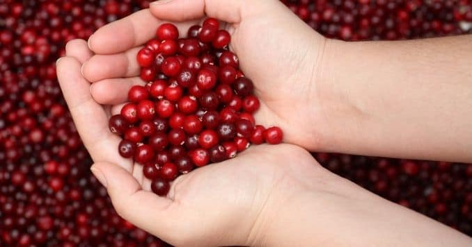 Cranberry in palms