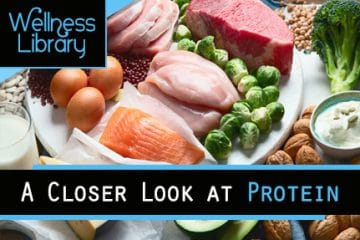 A Closer Look at Protein